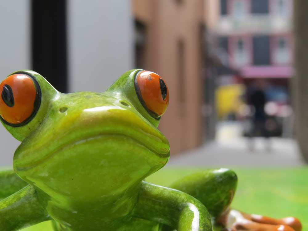 box-of-frogs-cafe-bantry